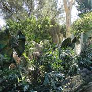Spitters aus Jurassic Park