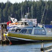 die Nayad Explorer, wohl das schnittigste Whale Watch Boot der Region