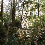 Schooner Trail