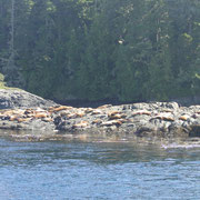 Sealions on the rocks