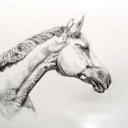 Grey Lady, Bleistift (unverkäuflich)
