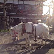 本家本元のどさんこ。賢くて、力持ち、とてもやさしい性格の馬です。
