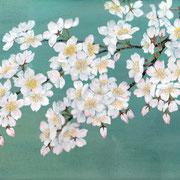 2011年4月 桜