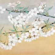 2007年4月 桜