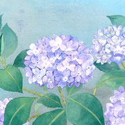2008年6月 紫陽花