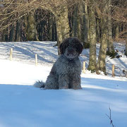 TAYCO re delle nevi