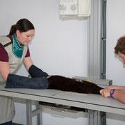 Hier sehen Sie eine Katze während einer Röntgenuntersuchung.