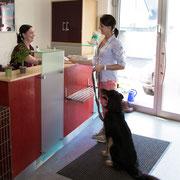An unserer Rezeption melden Sie sich und Ihr Tier an. Hier beraten wir Sie auch gerne bei Fragen.
