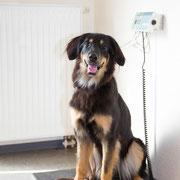 Im Anmeldebereich befindet sich auch die Waage, damit unsere Patienten stets die richtige Menge an Medikamenten erhalten. Außerdem ist das Gewicht ein guter Anhaltspunkt für den Allgemeinzustand Ihres Tieres.