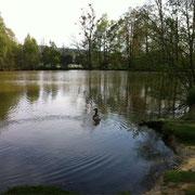 les étangs des Tourbières Randonnées à Saint Germer de Fly