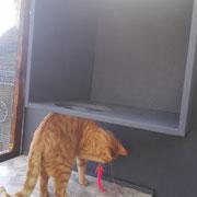 Gary liebt seine Ausflüge auf den gesicherten, überdachten Balkon
