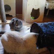 Lilly und Mio machen Urlaub im kleinen Hundezimmer