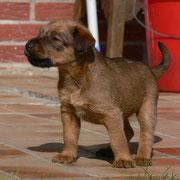 Kleiner Terrier - große Welt...