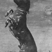 circa 1930