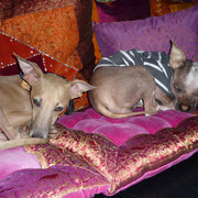 Kirin und Lotte