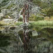 Gespiegelter Baum-Nockberge