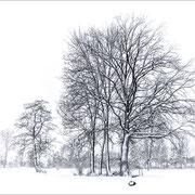 Baumgruppe, Wässermatten Lotzwil. Als Fine-Art-Print erhältlich, auch gerahmt.