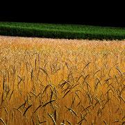 Reifende Kornfelder. Max. Foto-Format 50 x 28 cm. Preise: Ab 220 CHF.