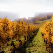 Herbststimmung am Murtensee. Max. Foto-Format 60 x 40 cm. Preise: Ab 195 CHF.