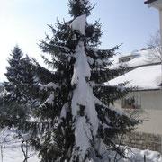 50cm Schnee in Basel