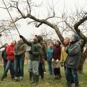 snoeicursus in de boomgaard onder leiding van Peer Stevens