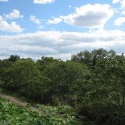 2012年 収穫の秋