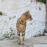 Straßenkatze in Argiropoulis
