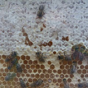 Wo ist der Honig?