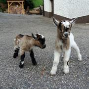 Unsere jüngsten Ziegen Susi und Strolchi