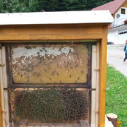 Das Bienenvolk