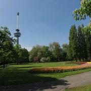 Schöne Parkfläche. Im Hintergrund der Euromast.
