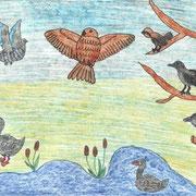 Кристина К., 3б кл. Сова и другие птицы