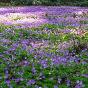 Blumenwiese im Botanischen Garten