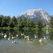 Fischteich bei Schloss Trautenfels