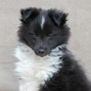 Cody mit 8,5 Wochen