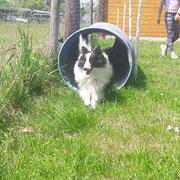 Phoebe übt schon fleißig Tunnel