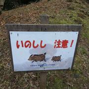 いのしい出るぞ!かぼす師匠はこの公園でイノシシと激突!!