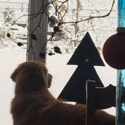 """Phelan """"staunt"""" über den ersten Schnee im Dezember 2017"""