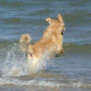 Philon liebt das Meer...