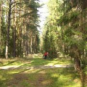 Ausflug in den Wald
