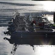Die Bootsflotte von Knut