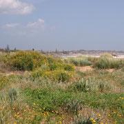 Vegetation vor der Villa Giuseppina