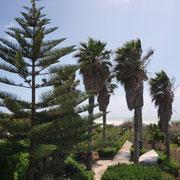 die vier Palmen des Hauses