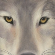 """Wolf Eyes""     Soft Pastel    Sold"