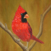 Cardinal   -   Soft Pastel   -  Available