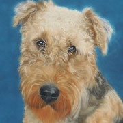 """Bo""  Airedale   Commission"