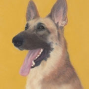 """Rin Tin Tin Remembered""    Available"