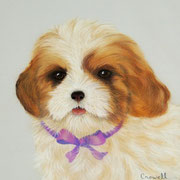 """""""Puppy Love""""    Available"""