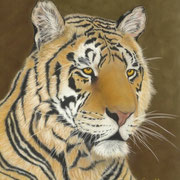 """""""Lost in Thought""""     Soft Pastel"""