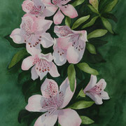 Pink Azaleas   -   Watercolor  -  Available
